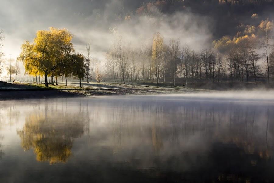 Lueur de brume by Sylvie Pierrat - Landscapes Waterscapes ( soleil, vosges, brume, arbre, lac, automne,  )