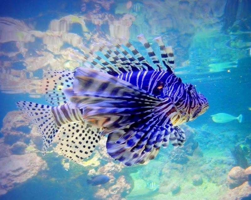 acquarius di provenza