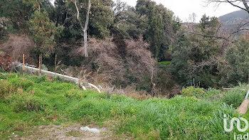 terrain à Barbaggio (2B)