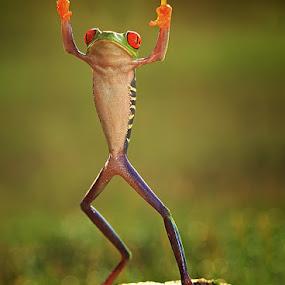by Shikhei Goh II - Animals Amphibians