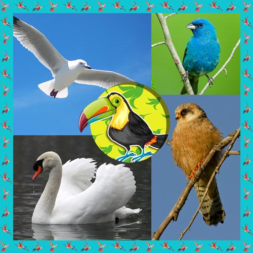 Download 83 Foto Gambar Burung Merak Untuk Kolase HD Terbaru