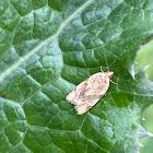 Garden Tortrix Moth