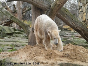 Photo: Knut ist wieder auf dem Sandhaufen ;-)