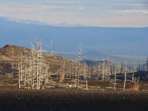 Photo: ну, в общем, всё там же- мертвый лес в окрестностях Толбачика