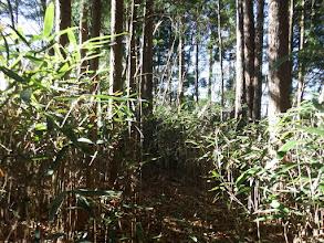 平坦な道となり笹が生い茂る