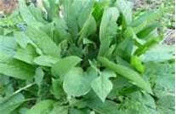 Antifungal/antibacterial Salve Recipe