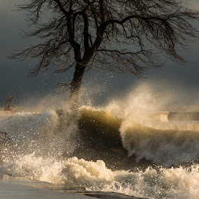 North Ave waves by David Kreutzer - Landscapes Beaches ( clouds, north ave, winter, illinois, cold, tree, wave, beach, chicago )