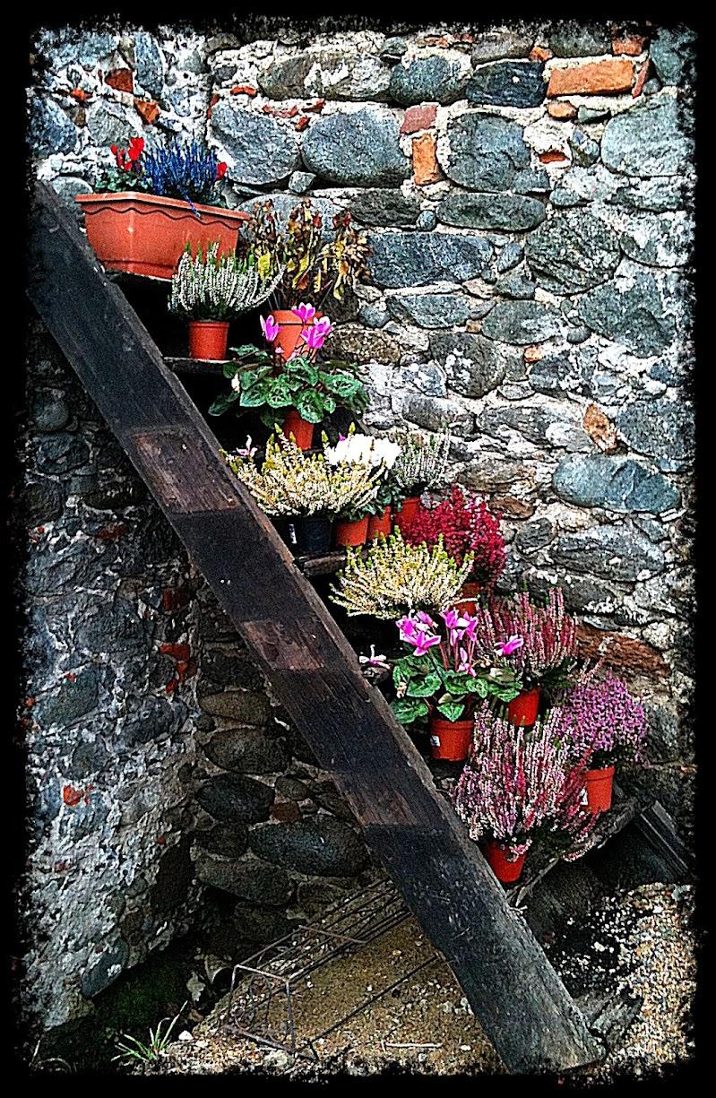 scala di fiori  di Gabor