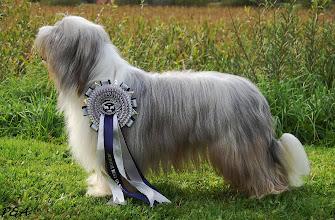 Photo: ICH.HONEYTASTE HOTTER THAN HELL EURO DOG SHOW CELJE 2010