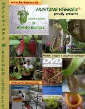 Photo: Unser Film über Borneo Exotics inklusive einer Diaschau auf DVD. Our film on Borneo Exotics including a slide-show on DVD.