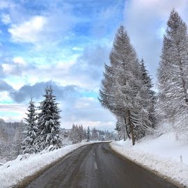 Winter Road by Paul Dolean - Landscapes Travel ( clouds, sky, snow, trees, road,  )
