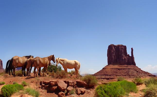 Cavalli nella Valley di mt antona