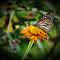 Butteryfly_digital.jpg