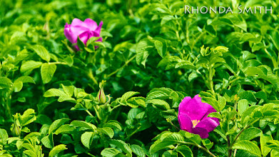 Photo: Some flowers in the bushes along the walkway of the docks.