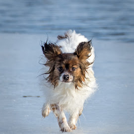 by Anngunn Dårflot - Animals - Dogs Running