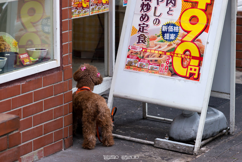 Photo: The dog had been long forgotten.