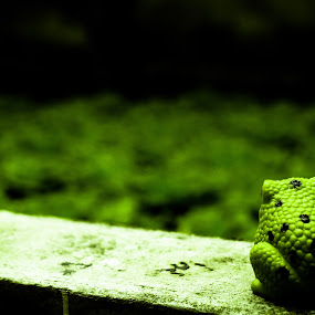 Green toy frog by Lubelter Voy - Artistic Objects Other Objects ( tiny, toy, damp, pool, frog, green, small, animal )