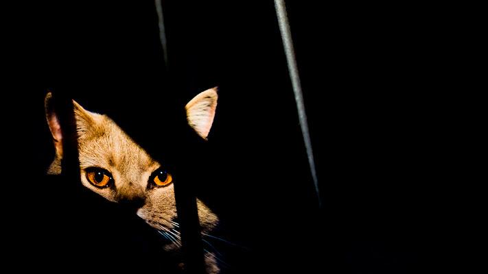 Occhi di gatto di Roberto Di Patrizi