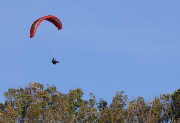 Volare sugli alberi di Fe140