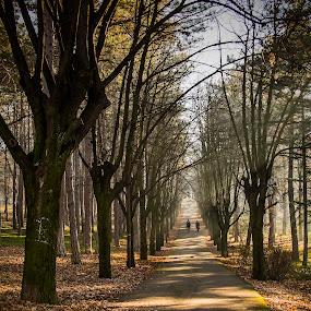 From Nowhere by Nenad Borojevic Foto - City,  Street & Park  Street Scenes ( wood, tree, street, forest, people,  )
