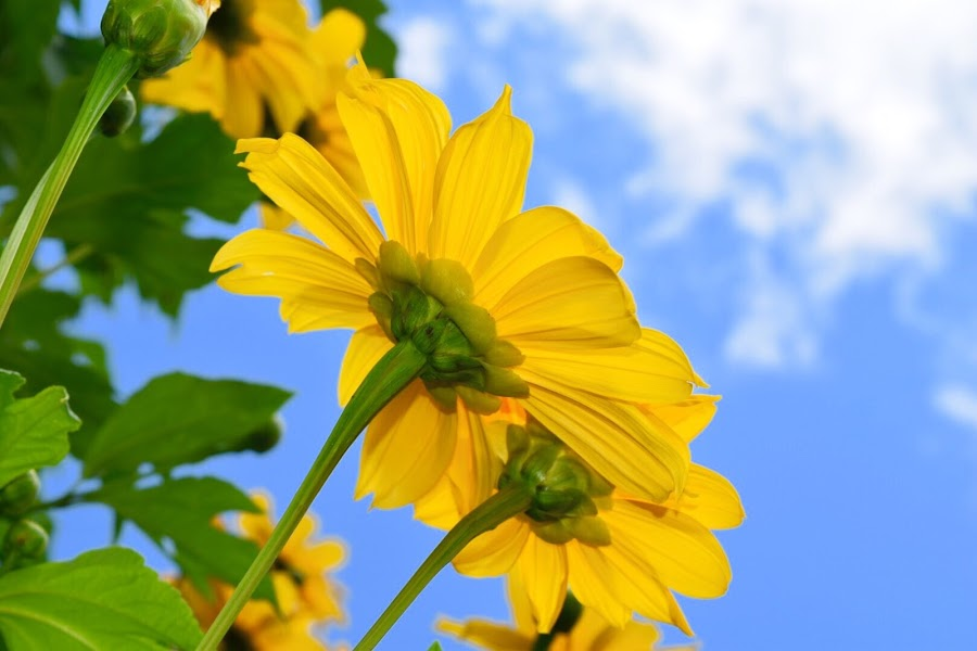 by Lorna Littrell - Flowers Flowers in the Wild ( yellow, flowers,  )