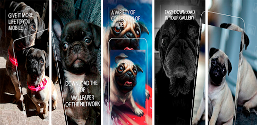 Wallpaper Pug Hd Apps On Google Play