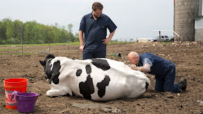 How Now Smelly Cow thumbnail