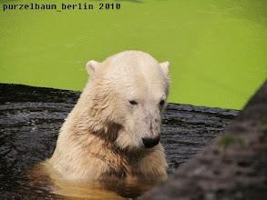 Photo: Knut badet eine Runde :-)