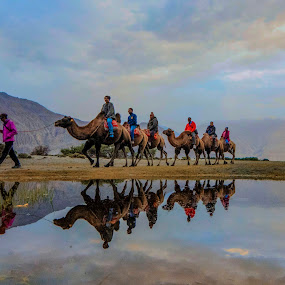 Reflection by Santanu Majumder - People Street & Candids ( mountains, reflection, bactrian camel, water, landscape )