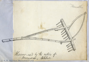 Photo: Pencil sketch of a plough from Makassar, Sulawesi by A. R. Wallace in 18??. Copyright The A. R. Wallace Memorial Fund.