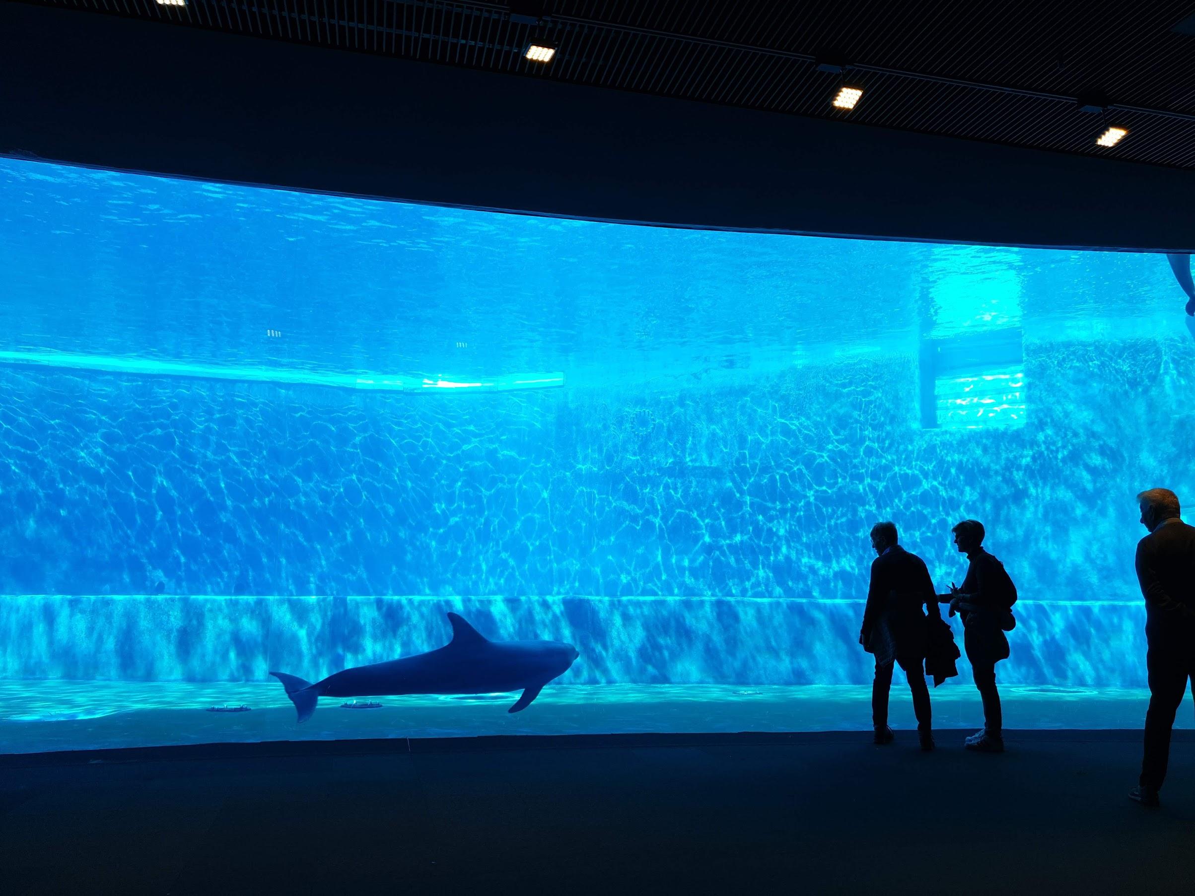 delfin, delfinariu, acvariul din genova, genoa aquarium, acvariul genova italia, acvariul genova harta