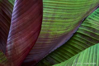 Photo: Leaf detail