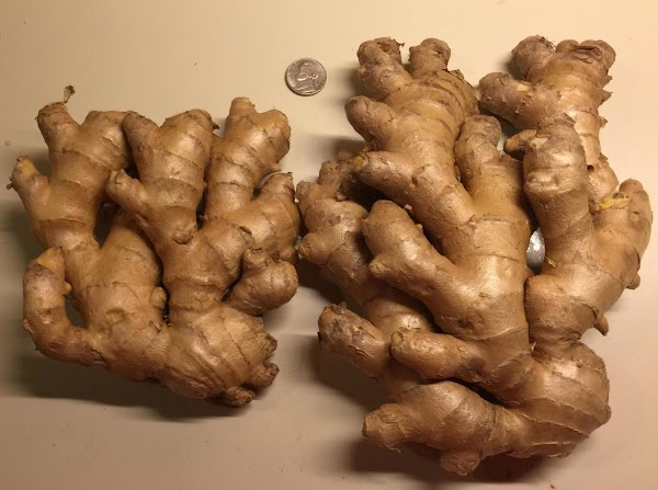 That's a nickel I put in the picture for scale. These are two very nice LARGE hands of fresh ginger.