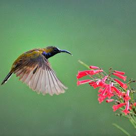 Dinner time by David Lee - Animals Birds