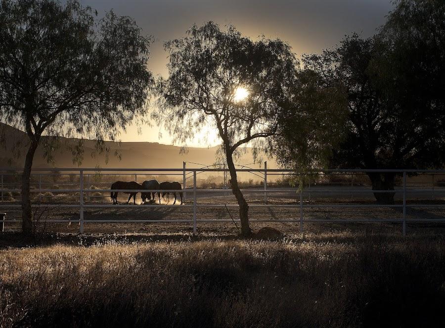 Morning Glory by Tony Berru - Landscapes Prairies, Meadows & Fields ( backlit, horses, fog, morning, tony berru )