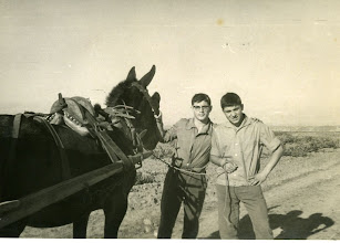 Photo: Vendimiando en la Finca, 1963