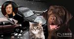 政府擬修訂法例 涉貓狗等動物受傷交通意外 司機必須報警