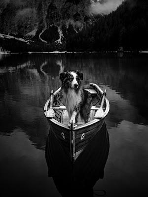 King of the lake di Marco Tagliarino