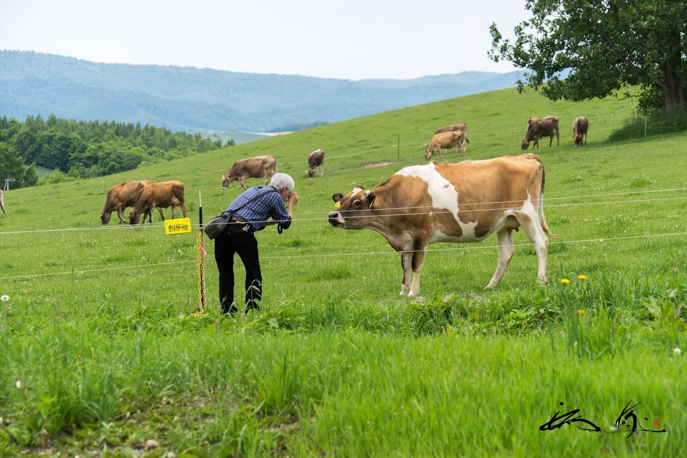 牛さんと親しげにひそひそ話