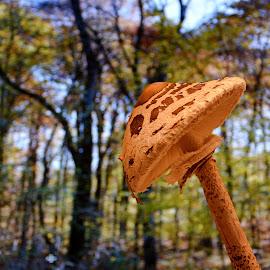 by Angela Codrina Andries Bocse - Nature Up Close Mushrooms & Fungi