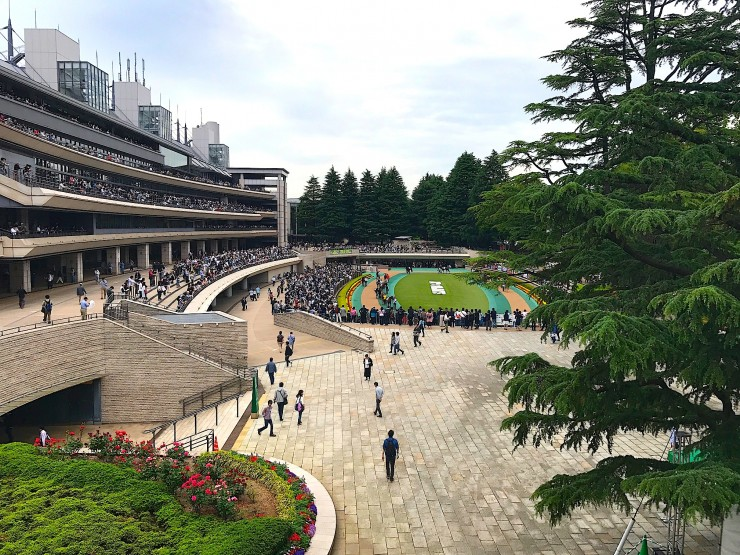 【魅惑のギャンブル場メシ】東京競馬場で味わいたい最高のホルモン焼き / 豚やの「牛ホルモン焼き」