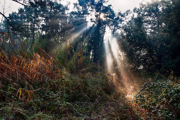 Raggi nel bosco di Fotodiale