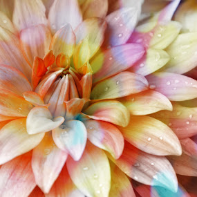 A SPLASH OF COLOR by Bethany Kenney - Flowers Single Flower (  )