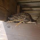 3 bird nests