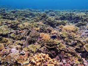 Photo: Reef outside Small Lagoon, Miniloc Island, Palawan, Philippines.