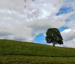 Photo: Simple  #TreeTuesday ( +Tree Tuesday ) Curated by +Christina Lawrie +Allan Cabrera +Ralph Mendoza +Kim Troutman and +David R Robinson