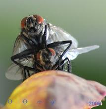 Photo: gestreifte Fliege