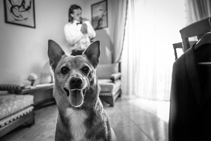 Φωτογράφος γάμων Alessandro Spagnolo (fotospagnolonovo). Φωτογραφία: 16.07.2019