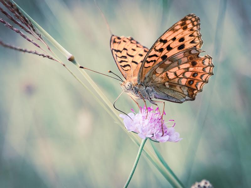 """""""ottimo questo fiorellino"""" di Matteo Masini"""