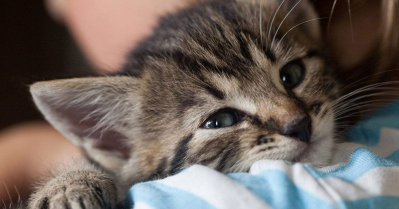 """Veterinary Clinic in Ireland to Hire a Professional """"Cat Cuddler"""""""